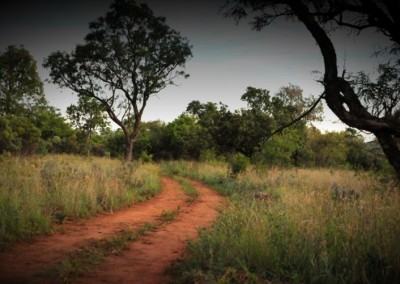 elements bushveld 800x500